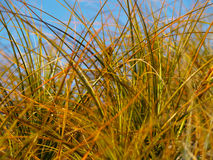 Abstract beach grass, close-up. Stock Photography