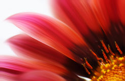 Abstract beautiful flower. Abstract blurred flowers. Intentional motion blur. Abstract beautiful flower, colorful floral background , wet red petals, nature Stock Photography