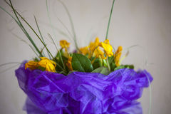 Abstract beautiful gentle spring flower background. Tulip flower Royalty Free Stock Photos