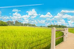 Abstract the beautiful green paddy rice field with the beautiful sky clouds,the sidewalk bridge at Ban Chee Tuan,Khuangnai dist. Rict , Ubon Ratchathani province royalty free stock photo