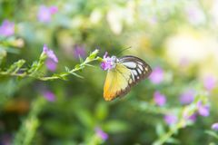 Abstract beautiful light from sunshine. Butterfly on the green leaf. Abstract beautiful light from sunshine Royalty Free Stock Images