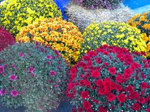 Abstract beautiful red, blue, yelow, flowers bouquets background stock image
