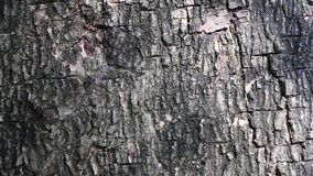 Abstract beauty in nature. Shadow of moving leaves on the surface of tree bark. stock footage