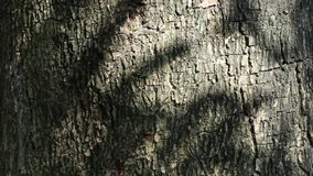 Abstract beauty in nature. Shadow of moving leaves on the surface of tree bark. stock video