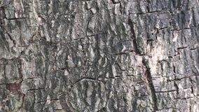 Abstract beauty in nature. Shadow of moving leaves on the surface of tree bark. stock video footage