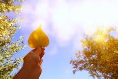 Abstract beeld die van man hand droog gouden blad houden Stock Foto