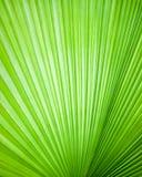 Abstract beeld van bladeren Stock Afbeeldingen