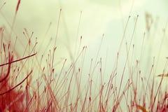 Abstract beeld van bladeren Stock Foto