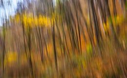 Abstract beeld van bomen in een de herfstbos Stock Afbeelding