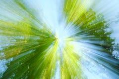 Abstract beeld van boom in platteland Gecreeerd door uit te zoemen terwijl sluitend blind De gezoemsnelheid blured motie royalty-vrije stock fotografie