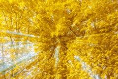 Abstract beeld van boom in platteland Gecreeerd door uit te zoemen terwijl sluitend blind De gezoemsnelheid blured motie stock fotografie
