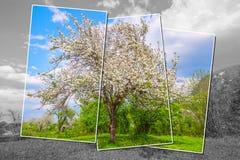 Abstract beeld van de appelboom Stock Fotografie