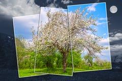 Abstract beeld van de appelboom Stock Afbeelding