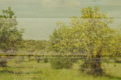 abstract beeld van de bomen Dubbel blootstellingseffect Royalty-vrije Stock Foto's