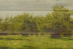 abstract beeld van de bomen Dubbel blootstellingseffect Royalty-vrije Stock Foto