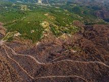Abstract beeld van de hemel, gebrande bossen Stock Afbeelding