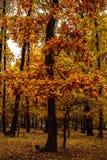 abstract beeld van de kleurrijke herfst Stock Afbeeldingen