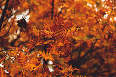 abstract beeld van de kleurrijke herfst Royalty-vrije Stock Foto