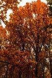 abstract beeld van de kleurrijke herfst Stock Fotografie