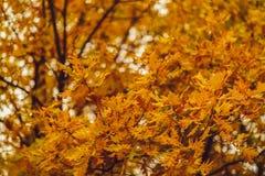 abstract beeld van de kleurrijke herfst Royalty-vrije Stock Foto's