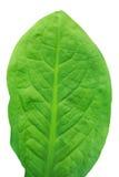 Abstract beeld van de verse groene bladeren van de bladtextuur in aardwi Royalty-vrije Stock Afbeeldingen