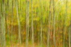 Abstract Beeld van een Bos Stock Foto