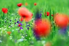 Abstract beeld van een gebied met de lentebloemen Royalty-vrije Stock Afbeeldingen