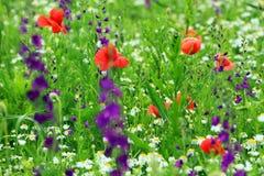 Abstract beeld van een gebied met de lentebloemen Stock Afbeeldingen