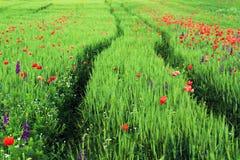 Abstract beeld van een gebied met de lentebloemen Royalty-vrije Stock Foto's