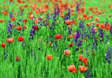 Abstract beeld van een gebied met de lentebloemen Stock Fotografie