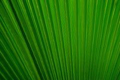 Abstract beeld van een groen palmblad voor de achtergrond Royalty-vrije Stock Afbeelding
