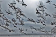 Abstract beeld van een groepszeevogels op de lucht Stock Foto