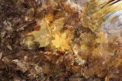 Abstract beeld van gevallen gele esdoornbladeren stock afbeelding