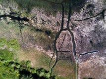 Abstract beeld van gras in de rivier Stock Fotografie