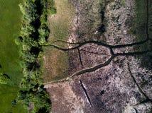 Abstract beeld van gras in de rivier Royalty-vrije Stock Foto's