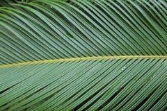 Abstract beeld van groen palmblad Stock Afbeelding