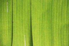 Abstract beeld van groen palmblad voor achtergrond Royalty-vrije Stock Foto's