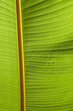 Abstract beeld van Groene Palmbladen in aard Royalty-vrije Stock Afbeeldingen