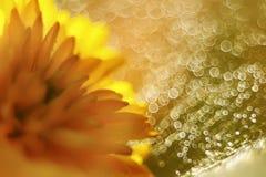 Abstract beeld van heldere gele bloemen en bokeh Royalty-vrije Stock Fotografie
