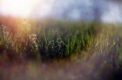Abstract beeld van het de lentegras Stock Foto's