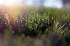 Abstract beeld van het de lentegras Stock Afbeelding