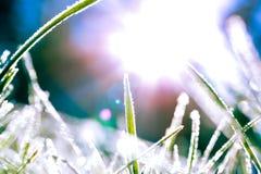 Abstract beeld van ijzige grasbladen met de erachter zon Royalty-vrije Stock Afbeeldingen