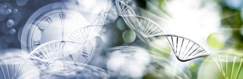 abstract beeld van klok en genetisch kettingsclose-up Stock Afbeeldingen