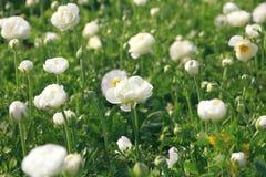 Abstract beeld van mooie witte de lentebloemen Royalty-vrije Stock Afbeelding