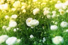 Abstract beeld van mooie witte de lentebloemen Royalty-vrije Stock Foto
