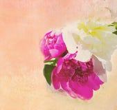 Abstract beeld van pioenen Royalty-vrije Stock Foto