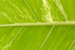 Abstract beeld van verse Groene Palmbladen Stock Afbeeldingen