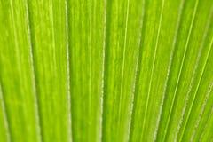 Abstract beeld van verse Groene Palmbladen Stock Foto's