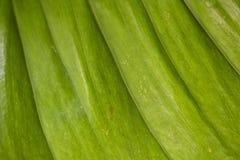 Abstract beeld van verse Groene Palmbladen Royalty-vrije Stock Afbeeldingen