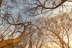 Abstract big trees and sunset sky Royalty Free Stock Images